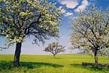 blühende Bäume im Frühling